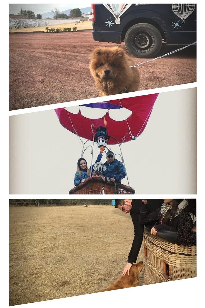 donde puedo volar en globo aerostático con mi mascota en México