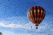 globos aerostáticos en Tequisquiapan Querétaro